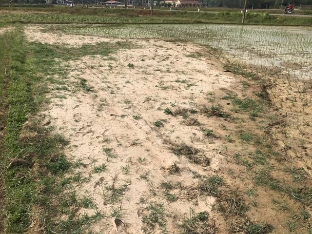 Miền Trung hạn hán kéo dài, đập cạn, người khát, ruộng khô - 15