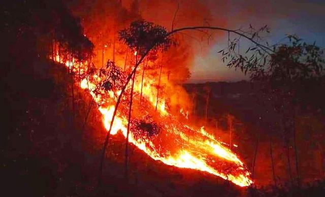 Hàng trăm người căng mình chữa cháy ở khu rừng cuồn cuộn lửa trong đêm - 9