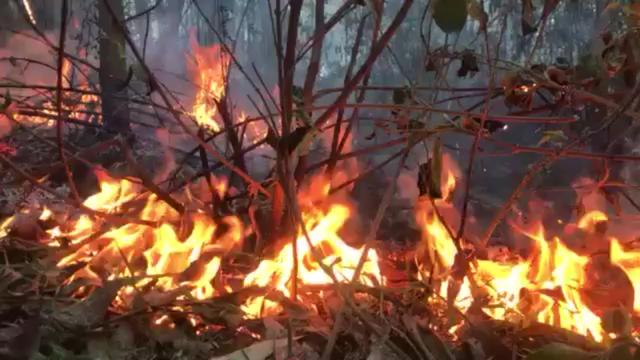 Cháy rừng cùng lúc 4 nơi ở Thừa Thiên Huế, 20 hộ dân di tán khẩn cấp - 7