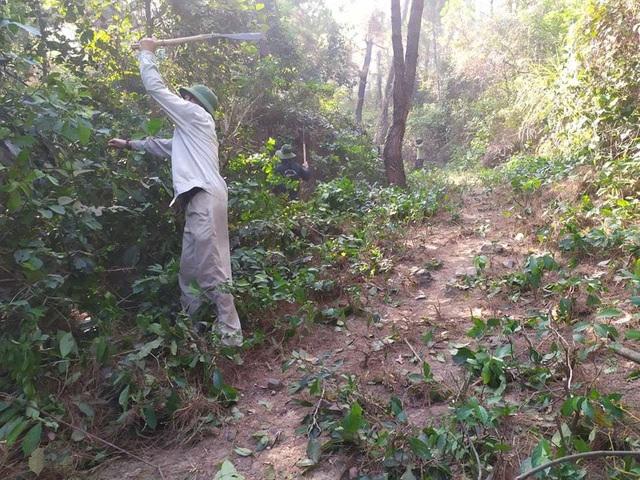 Tạm giữ 1 người nghi liên quan vụ cháy rừng nghiêm trọng tại Hà Tĩnh - 2
