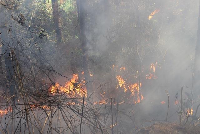 Tạm giữ 1 người nghi liên quan vụ cháy rừng nghiêm trọng tại Hà Tĩnh - 7