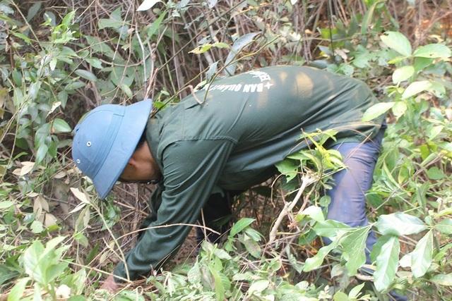 Tạm giữ 1 người nghi liên quan vụ cháy rừng nghiêm trọng tại Hà Tĩnh - 12