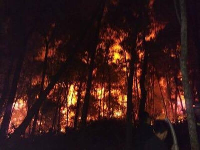 Tạm giữ 1 người nghi liên quan vụ cháy rừng nghiêm trọng tại Hà Tĩnh - 6