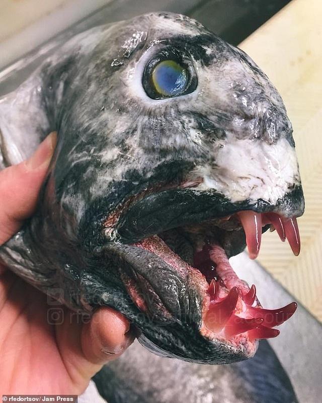 Những thủy quái kỳ dị đến mức khó tưởng tượng dưới biển sâu - 6