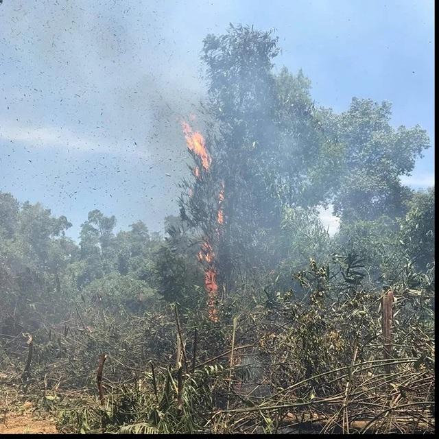 Hà Tĩnh: Lửa tiếp tục bùng phát dữ dội ở nhiều khu rừng - 1
