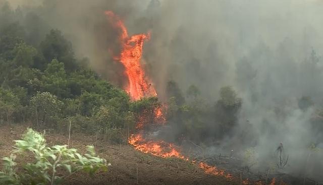 Hơn 50ha rừng bốc cháy, hàng trăm người căng mình dập lửa - 2