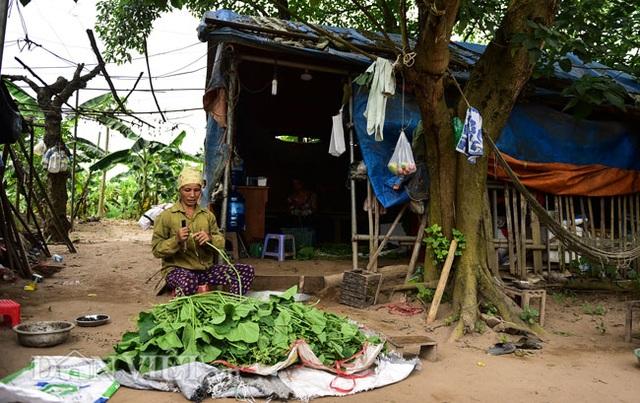 Cặp chị em trồng rau bí, bỏ túi tiền triệu mỗi ngày ở đảo hoang giữa Thủ đô - 13