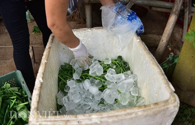 Cặp chị em trồng rau bí, bỏ túi tiền triệu mỗi ngày ở đảo hoang giữa Thủ đô - 14