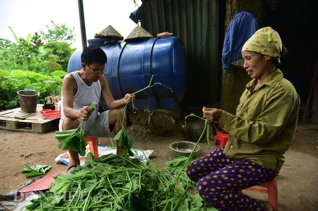 Cặp chị em trồng rau bí, bỏ túi tiền triệu mỗi ngày ở đảo hoang giữa Thủ đô - 7