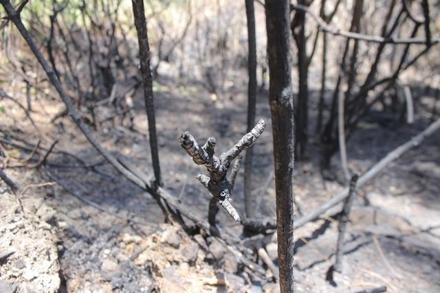 Toàn cảnh hơn 3 ngày đêm cháy rừng tràn lan ở Hà Tĩnh - 3