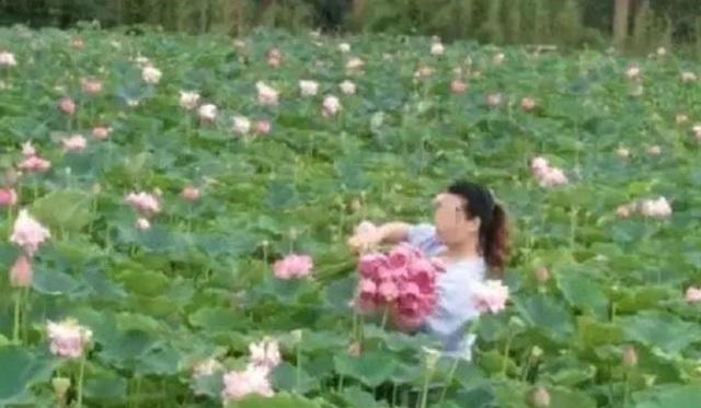 Khách trèo rào hái trụi hoa sen, công viên Trung Quốc buộc phải đóng cửa - 2