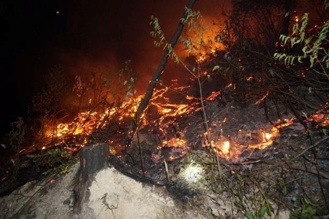 Thanh Hóa khẩn cấp phòng chống cháy rừng, hỏa tốc ứng phó mưa bão - 1