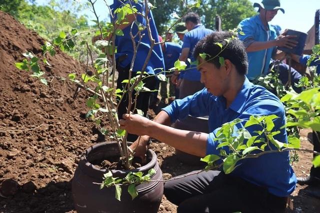 Đoàn viên, thanh niên Quảng Trị trồng hoa giấy làm đẹp đảo Cồn Cỏ - 4