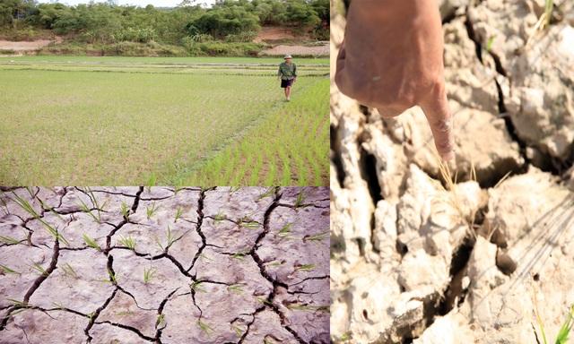 Cơn mưa quý hơn vàng giải cứu người dân sau những ngày nắng nóng - 1