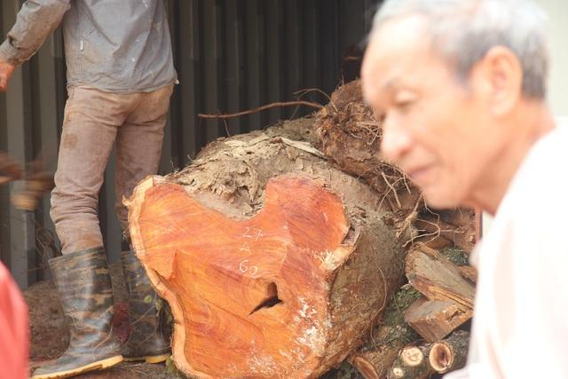 """Vỡ kế hoạch bán đấu giá hơn 5 tấn gỗ """"sưa trăm tỷ"""" - 1"""