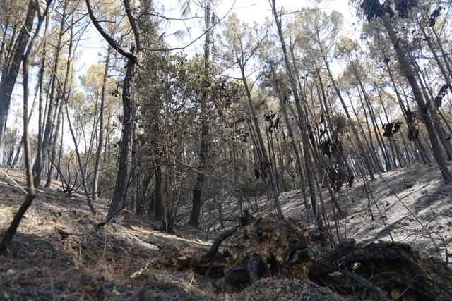 Chỉ 30% diện tích rừng bị cháy ở Nghi Xuân có khả năng phục hồi - 1