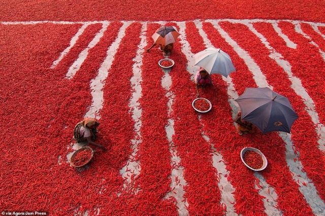 Bức ảnh gây sửng sốt của nhiếp ảnh gia Việt Nam tại giải ảnh quốc tế - 4