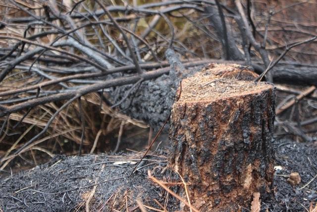 Chỉ 30% diện tích rừng bị cháy ở Nghi Xuân có khả năng phục hồi - 6