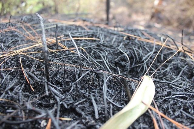 Chỉ 30% diện tích rừng bị cháy ở Nghi Xuân có khả năng phục hồi - 3