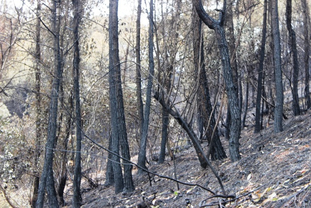 Chỉ 30% diện tích rừng bị cháy ở Nghi Xuân có khả năng phục hồi - 2