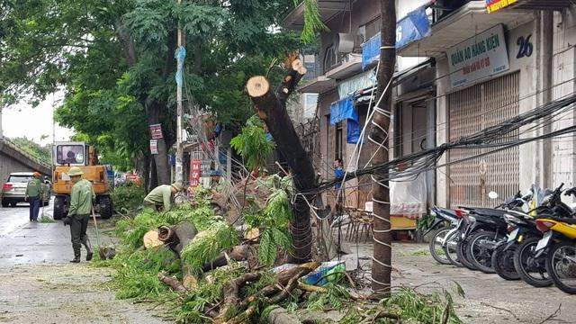 Hải Phòng ngổn ngang cây xanh gãy đổ sau khi bão quét qua - 5