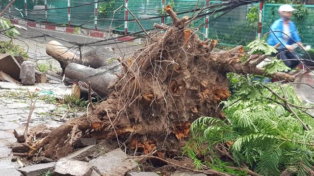 Hải Phòng ngổn ngang cây xanh gãy đổ sau khi bão quét qua - 2