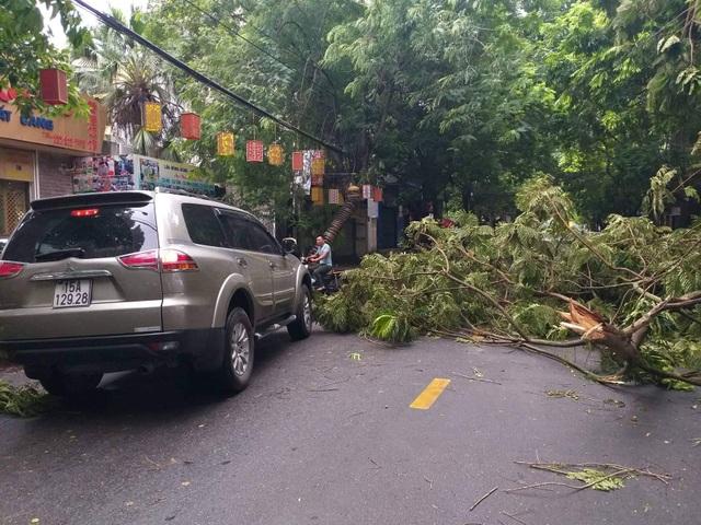 Hải Phòng ngổn ngang cây xanh gãy đổ sau khi bão quét qua - 9