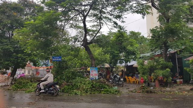 Hải Phòng ngổn ngang cây xanh gãy đổ sau khi bão quét qua - 8