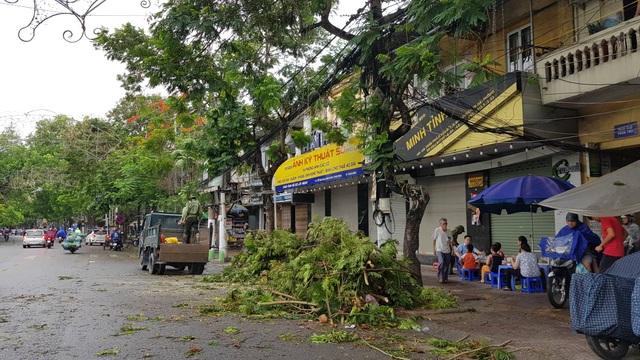 Hải Phòng ngổn ngang cây xanh gãy đổ sau khi bão quét qua - 7
