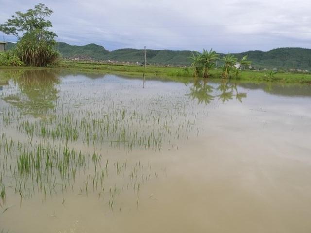 Ngã xuống ruộng lúa ngập nước sau trận mưa lớn, bé 22 tháng tuổi tử vong - 1