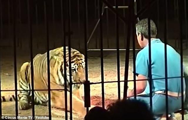Nghệ sĩ xiếc thú hàng đầu thế giới tử vong vì bị đàn hổ tấn công - 1