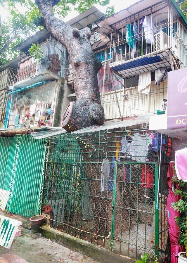 """Kỳ lạ lối kiến trúc """"cây mọc xuyên nhà"""" ở khu tập thể cũ Hà Nội - 10"""