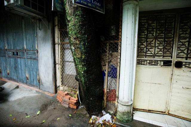 """Kỳ lạ lối kiến trúc """"cây mọc xuyên nhà"""" ở khu tập thể cũ Hà Nội - 11"""