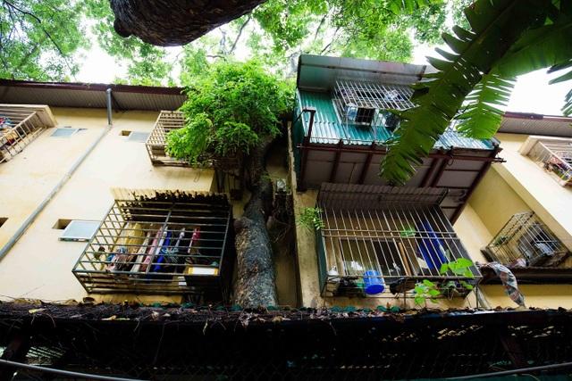 """Kỳ lạ lối kiến trúc """"cây mọc xuyên nhà"""" ở khu tập thể cũ Hà Nội - 12"""
