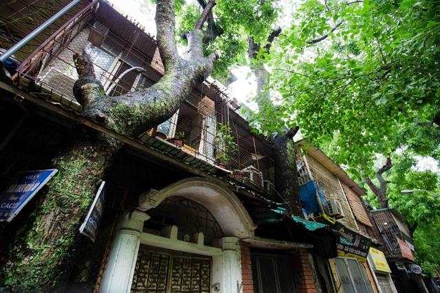"""Kỳ lạ lối kiến trúc """"cây mọc xuyên nhà"""" ở khu tập thể cũ Hà Nội - 3"""
