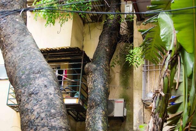 """Kỳ lạ lối kiến trúc """"cây mọc xuyên nhà"""" ở khu tập thể cũ Hà Nội - 4"""