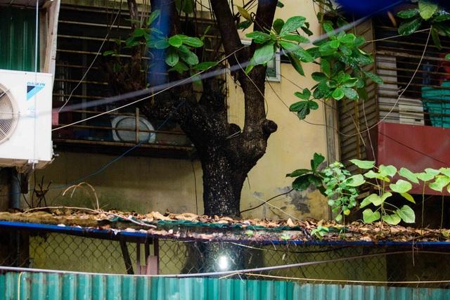 """Kỳ lạ lối kiến trúc """"cây mọc xuyên nhà"""" ở khu tập thể cũ Hà Nội - 5"""