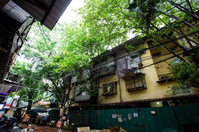 """Kỳ lạ lối kiến trúc """"cây mọc xuyên nhà"""" ở khu tập thể cũ Hà Nội - 6"""