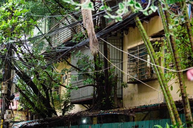 """Kỳ lạ lối kiến trúc """"cây mọc xuyên nhà"""" ở khu tập thể cũ Hà Nội - 7"""