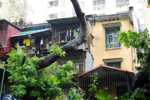 """Kỳ lạ lối kiến trúc """"cây mọc xuyên nhà"""" ở khu tập thể cũ Hà Nội - 8"""