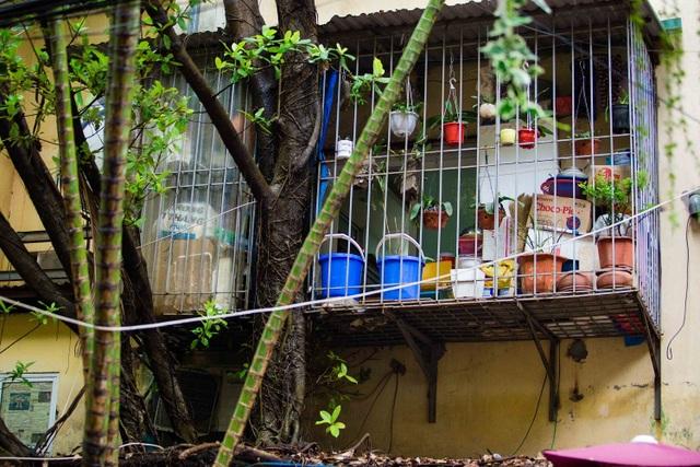 """Kỳ lạ lối kiến trúc """"cây mọc xuyên nhà"""" ở khu tập thể cũ Hà Nội - 9"""