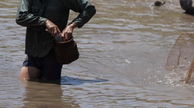 Đội nắng giữa trưa bắt cá lộc sau bão ở ngoại thành Hà Nội - 11