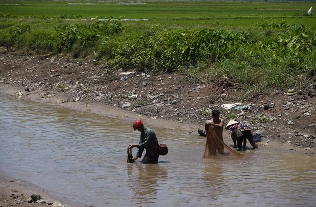 Đội nắng giữa trưa bắt cá lộc sau bão ở ngoại thành Hà Nội - 3