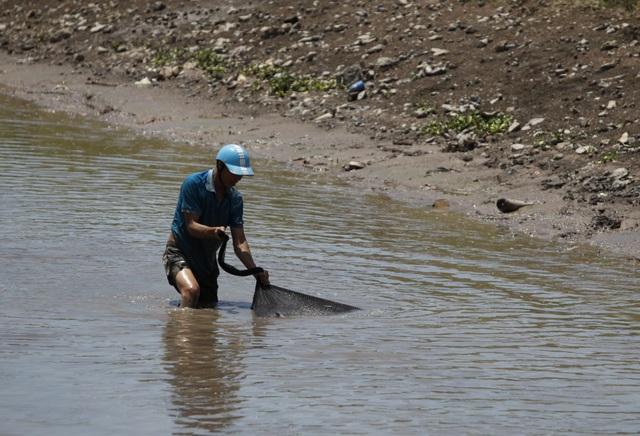 Đội nắng giữa trưa bắt cá lộc sau bão ở ngoại thành Hà Nội - 10