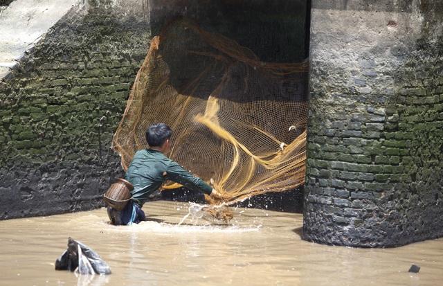 Đội nắng giữa trưa bắt cá lộc sau bão ở ngoại thành Hà Nội - 6