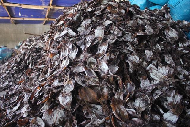 Trung Quốc siết quy định nhập khẩu, 2.000 tấn mực ùn ứ, ngư dân lao đao - 1