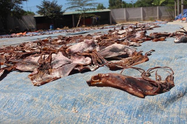 Trung Quốc siết quy định nhập khẩu, 2.000 tấn mực ùn ứ, ngư dân lao đao - 3