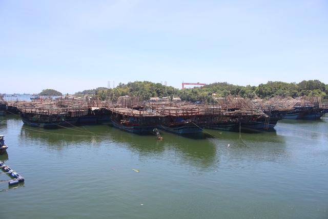 Trung Quốc siết quy định nhập khẩu, 2.000 tấn mực ùn ứ, ngư dân lao đao - 4