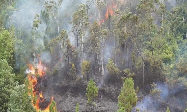 Đà Nẵng huy động hơn 100 bộ đội, dân quân dập đám cháy rừng - 3