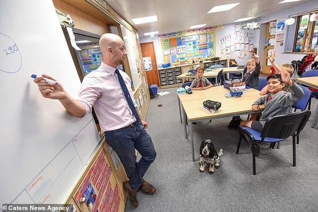 Anh: Chú chó thông minh giúp thầy giáo khiếm thính tự tin đứng trên bục giảng - 1